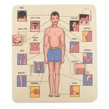 vücudumuzu tanıyalım